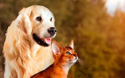 Cómo prevenir la leishmaniasis en tus mascotas