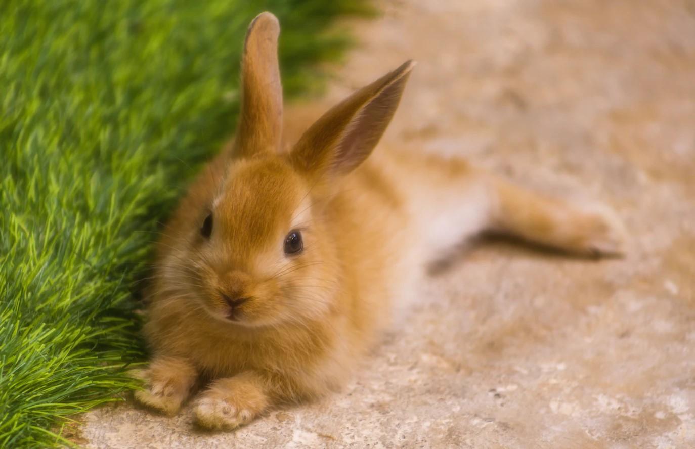 Conejitos como mascotas: pros y contras | Zotal Laboratorios