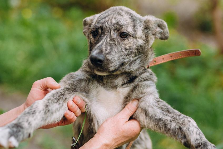 7 Consejos esenciales a tener en cuenta sobre mascotas para adoptar