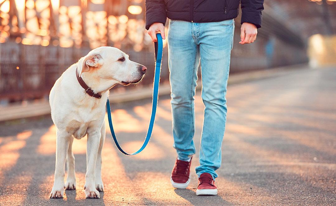 Mascotas y coronavirus: prevención y desinfección