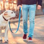 Desinfección de mascotas y coronavirus