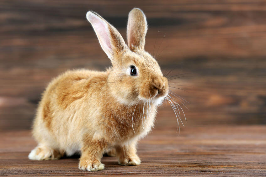 otras enfermedades de los conejos