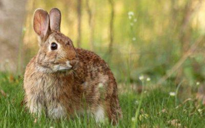 Las enfermedades de los conejos más comunes según su origen.