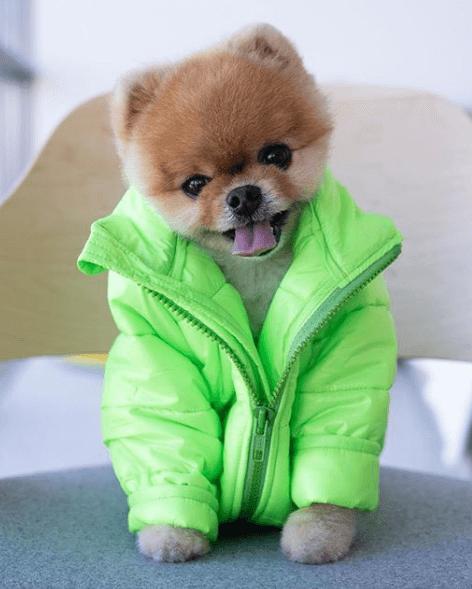 perros famosos en Instagram