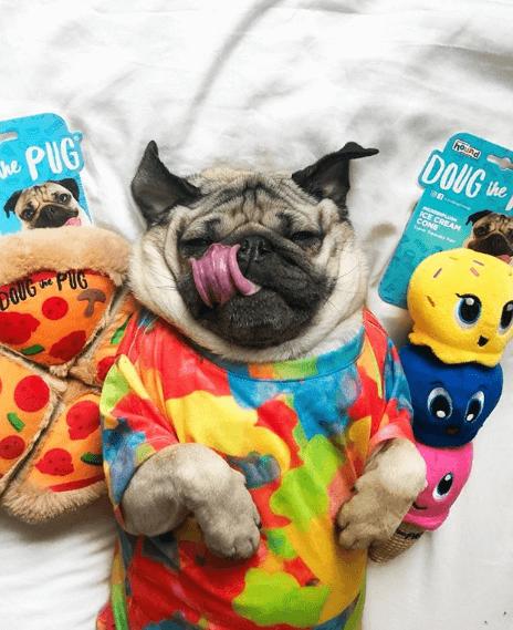 perros famosos en instagram 2