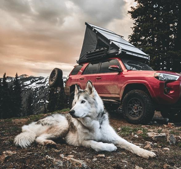 perros famosos en instagram loki