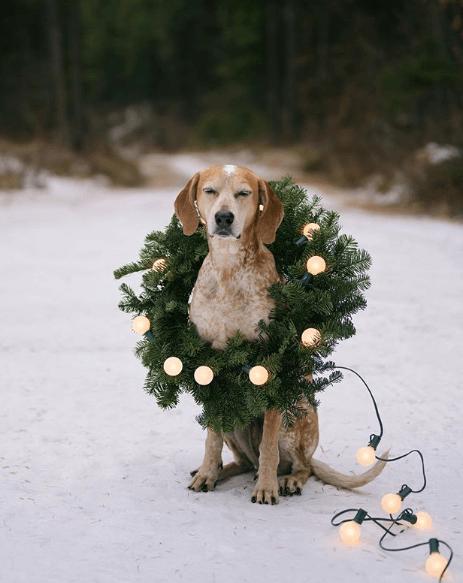 perros famosos instagram maddie