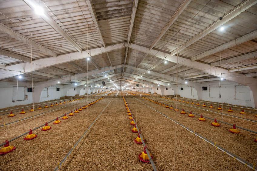 granja explotación avícola