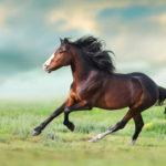 caballo con influenza equina