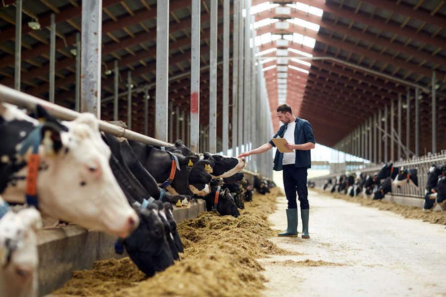 como desinfectar una explotacion bovina de leche