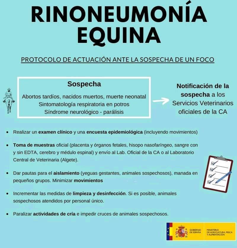 protocolo rinoneumonitis equina