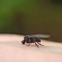 Cómo prevenir y tratar la picadura de la mosca negra