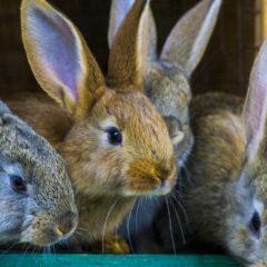 Imagen de conejos | Prevención, síntomas y tratamiento de la sarna en conejos | Zotal